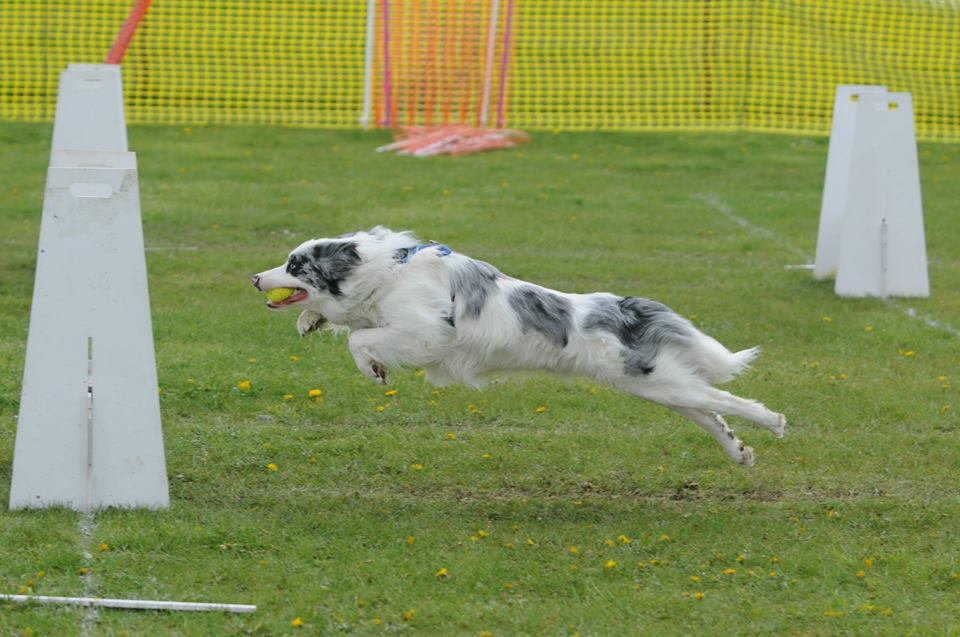 flyball_breeze